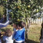 Orto, ortaggi, alberi da frutta e tanta fattoria